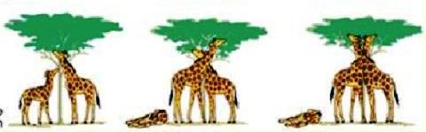 Ejemplos de la teoría evolucionista