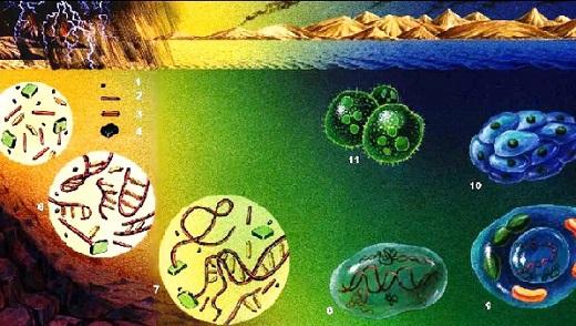 ¿Cómo se originó la vida según la teoría evolucionista?