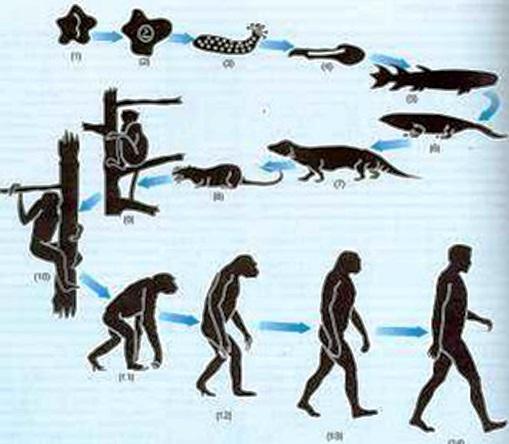 Propuestas hechas por Darwin en su teoría evolucionista