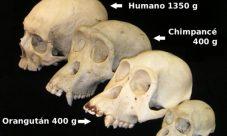 ¿Por qué la teoría evolucionista de Darwin es una de las más aceptadas?
