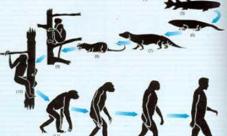 ¿Cuál es la evolución de las especies?