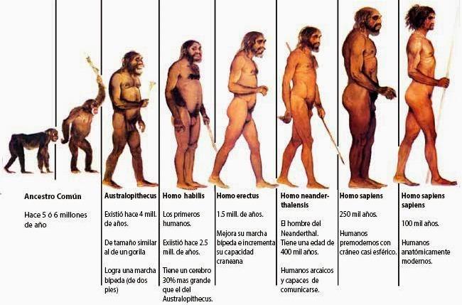 ¿Cómo fue la evolución del hombre según la teoría evolucionista?