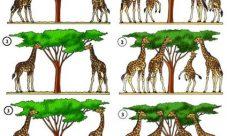 ¿Por qué es importante la evolución de las especies?