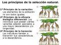 ¿Qué es la selección natural?